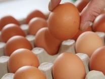Eier in einer Pappschachtel