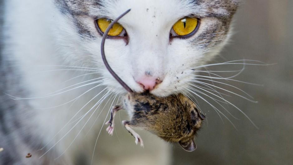 katze und maus spiel
