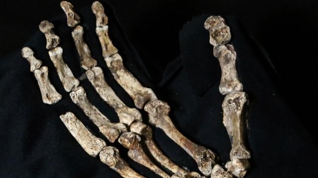 Anthropologie Homo naledi