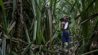 Indonesia's Deforestation Rate Becomes Highest In The World