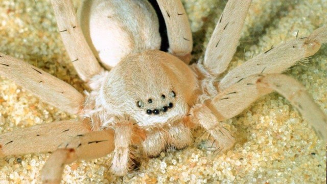Spinnen Arachnologie