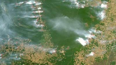 Amazonas-Regenwald in Gefahr