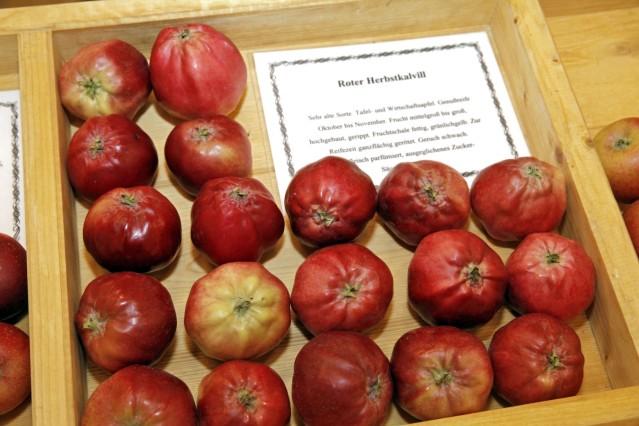 Saftig rote Äpfel datieren