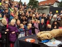 Zoo seziert Löwen