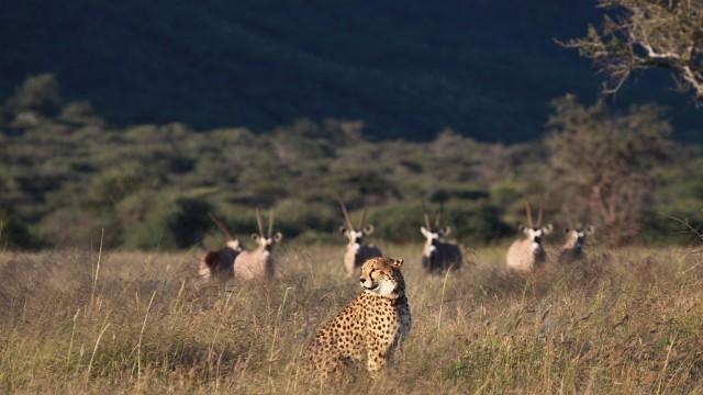 Okonjima - Nature Reserve