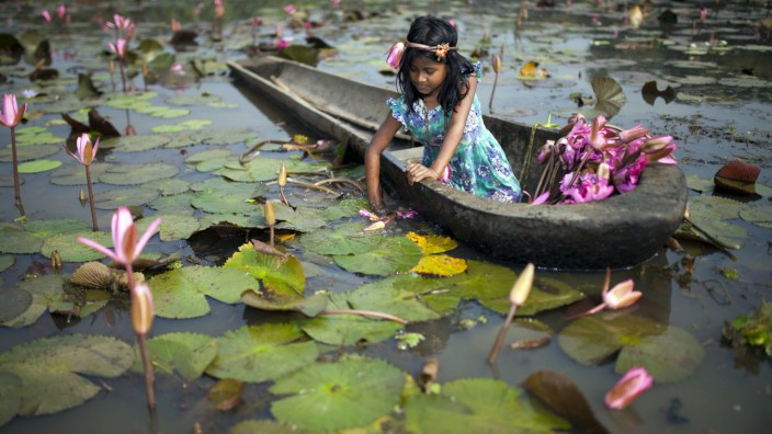 DHAKA BANGLADESH 06th November Rural children collect red water lily for their cattle near Dhaka o