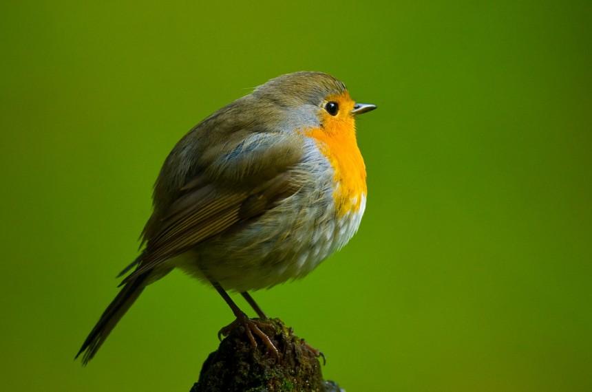 Naturschutz Vogel Futtern Aber Richtig Freising Suddeutsche De