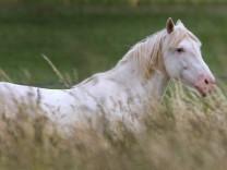 Pferd hinter hohem Gras