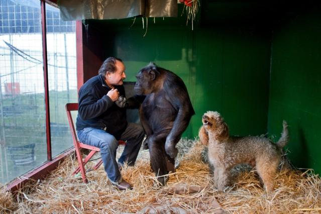 Gericht entscheidet über Zukunft von Schimpanse Robby