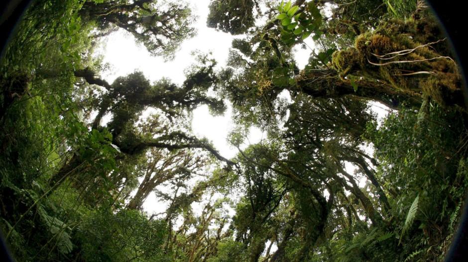 Regenwald in Costa Rica