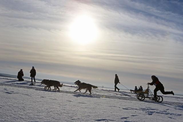 Schlittenhunderennen im Harz