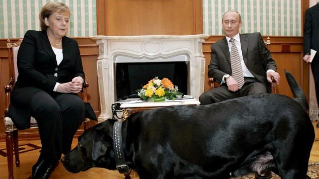 Putins Labrador-Hündin Koni bei Treffen mit Merkel