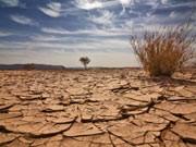 Wüste; iStockphotos
