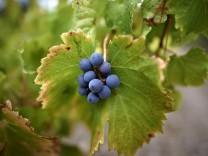 Weinanbau in Frankreich
