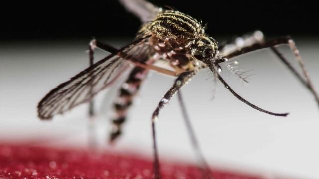 Zika virus spread has WHO considering global health emergency