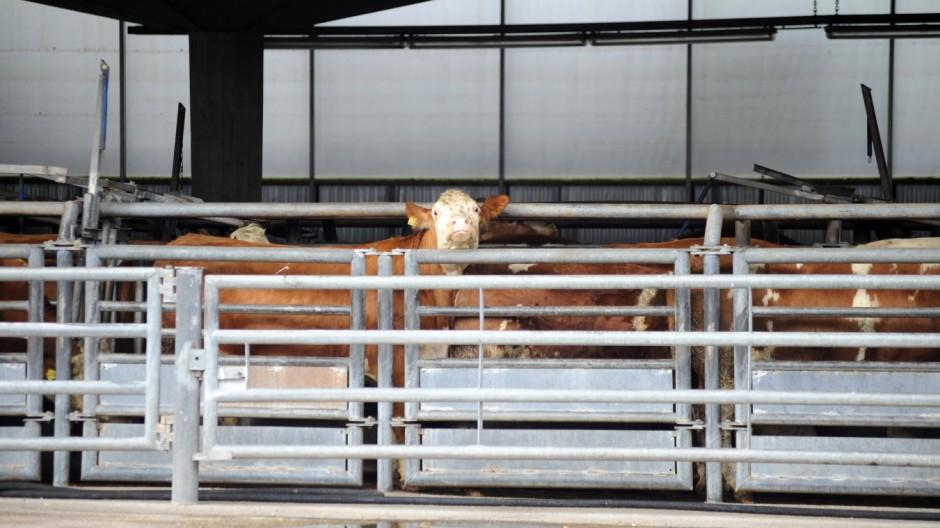 Süddeutsche Zeitung München Tierschutz und Lebensmittelrecht