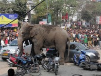Wild elephant on rampage in Siliguri