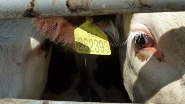 Tiertransporte Fleischindustrie