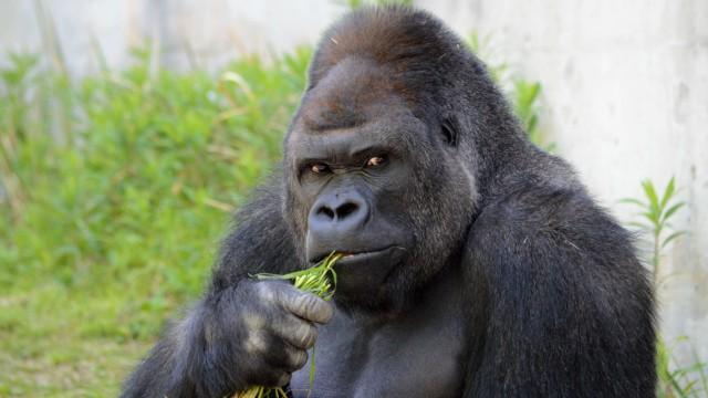 Tiere Zoologie