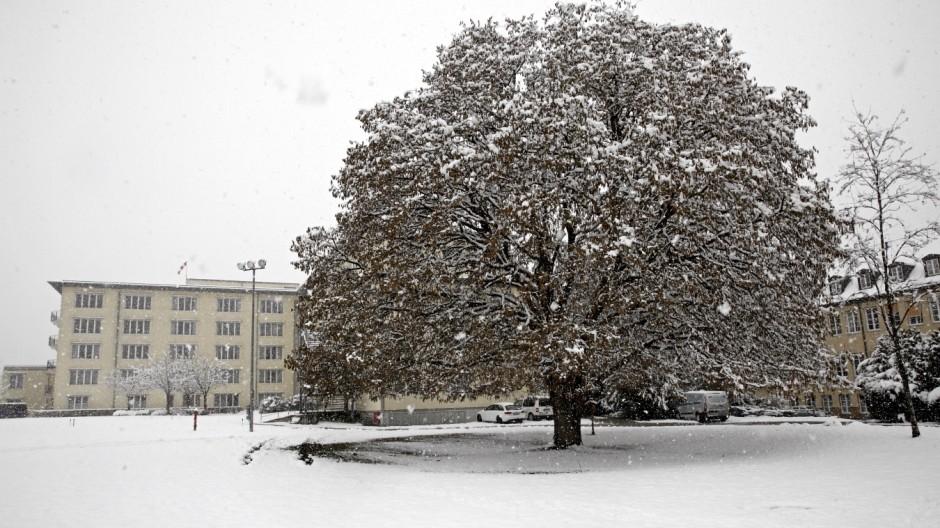 Wolfratshausen Alter Baum