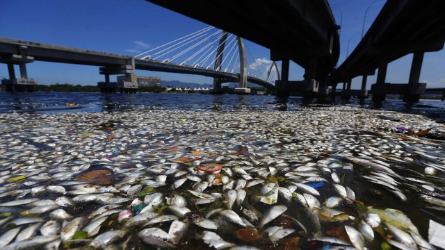 Dead fish are pictured on the banks of Guanabara Bay in Rio de Janeiro