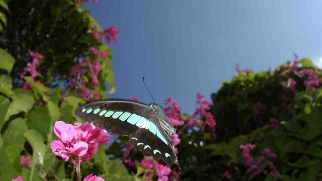 Schmetterlinge Schmetterlinge