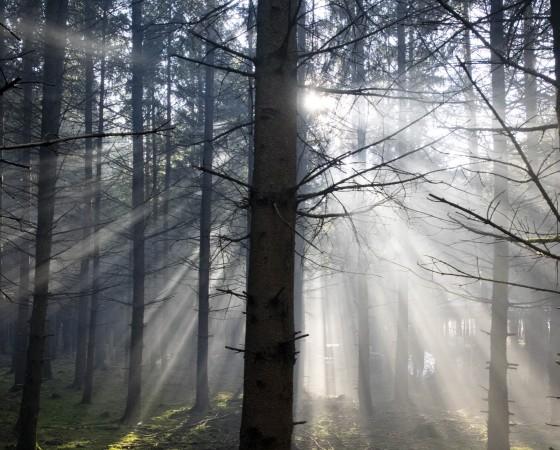 Nebelstimmung bei Baldham