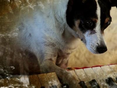 """""""Heart of a Dog"""" in der SZ Cinemathek: Das Medium, der Terrier"""