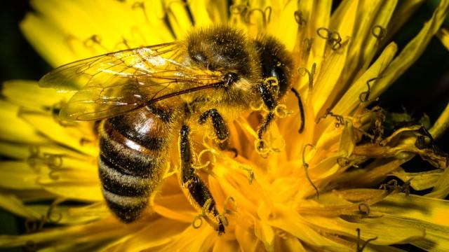 Bienen - Was zählt, sind die Völker!