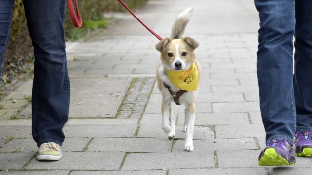 Unterhaching Gelbe Hunde