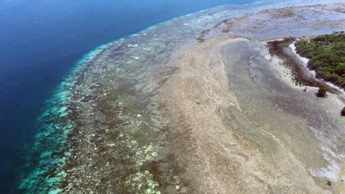 Bleiche Korallen
