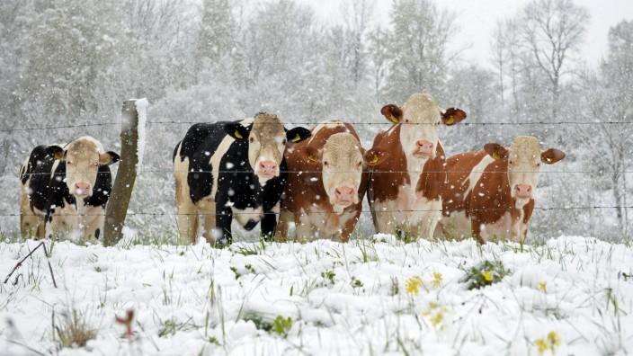 Schnee in Baden-Württemberg