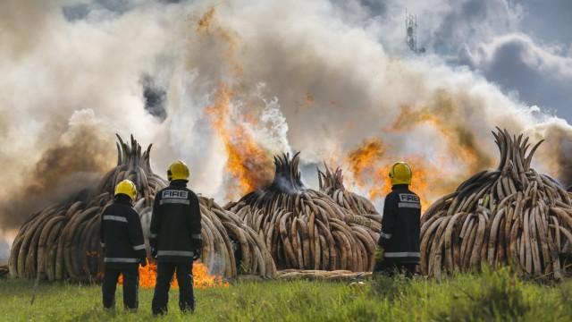 Kenya burns 105 tonnes of ivory