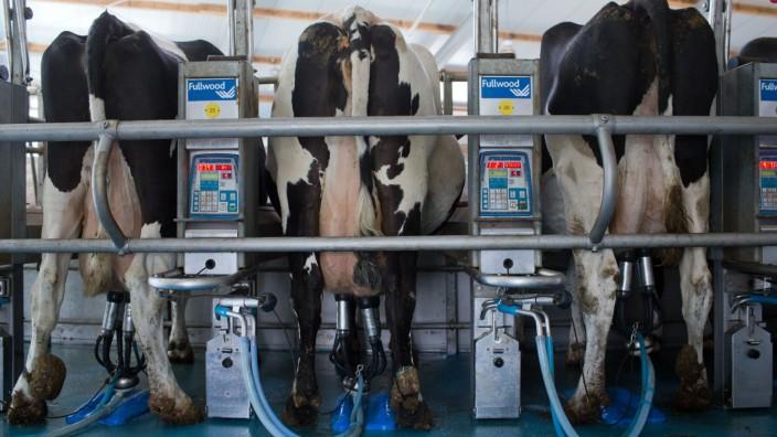 Agrarbetrieb mit Milchproduktion