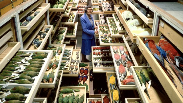 Birds Collections, National Museum of Natural History