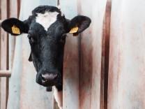 Milchviehbetrieb Schulte to Brinke