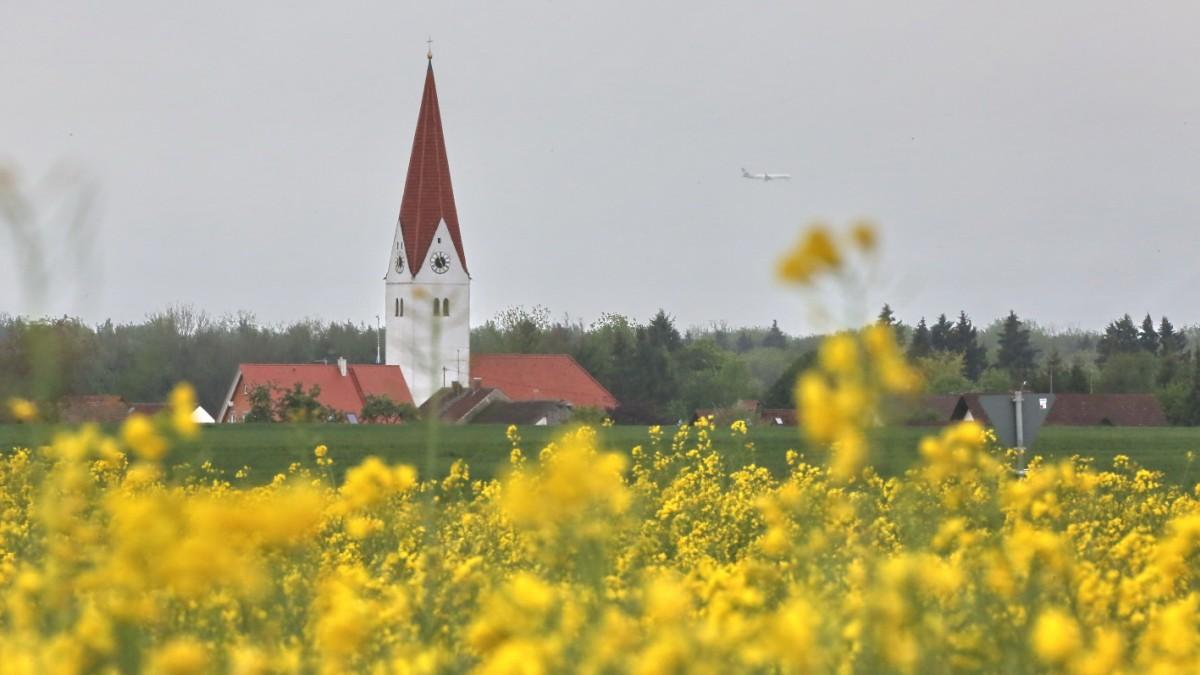 Rapsfeld - Landschaft in Gelb - Freising - Süddeutsche.de