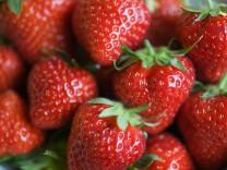 Eröffnung hessische Erdbeersaison