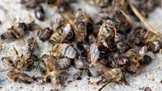 Bienen in Freiburg