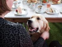 """Hund """"Piet"""" bei der Hochzeit von Janine Funke in Bonn"""