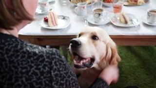 Hochzeit Wenn Der Hund Die Ringe Bringt Gesellschaft