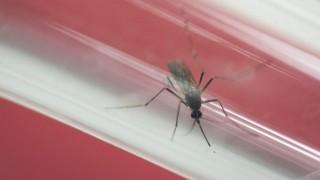 Zika-Virus Gesundheit