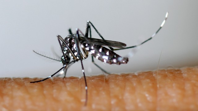 Seuchenbekämpfung Seuchenbekämpfung