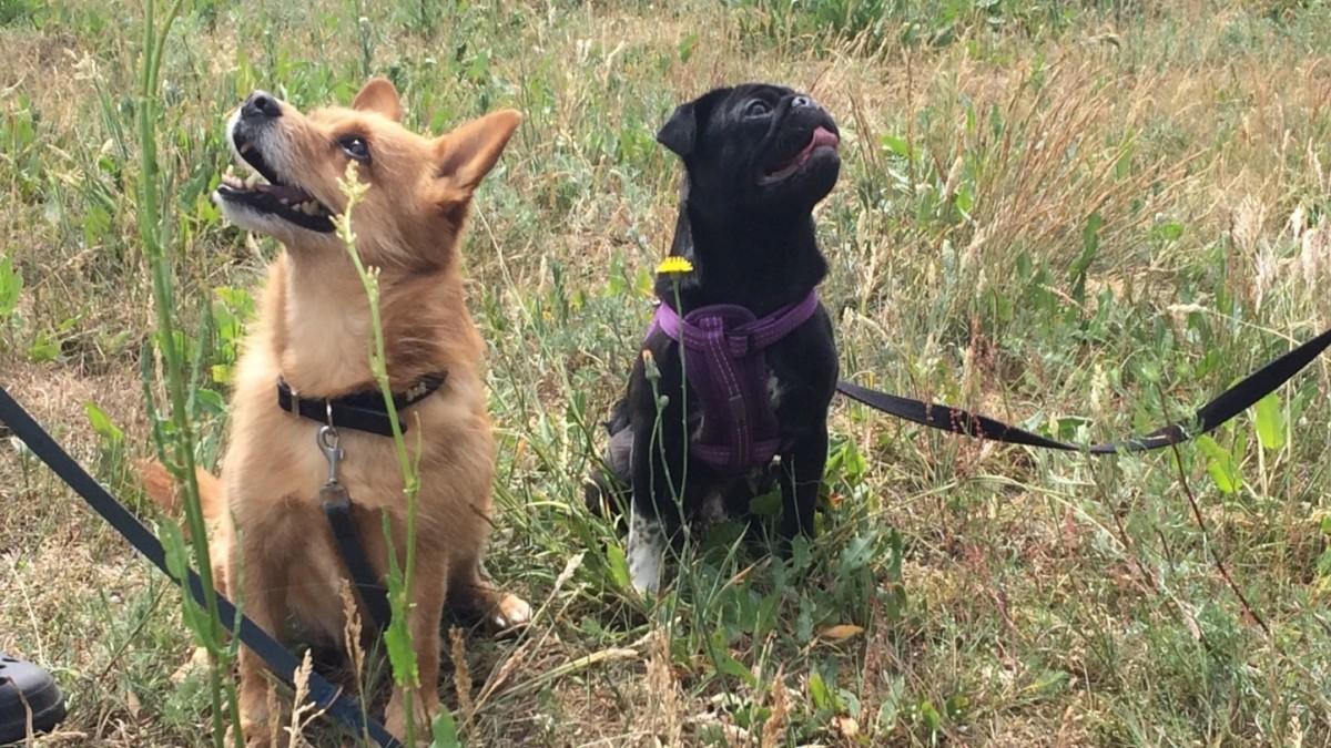 Das erstaunliche Gedächtnis der Hunde