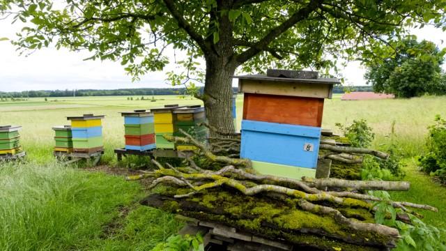 Zorneding Bienenkästen in grüner Wiese.
