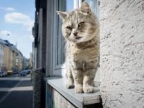 Fensterbrett Katze