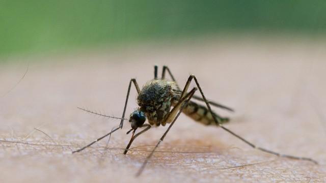 Viele Mücken nach Starkregen