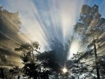 Wald  als Therapie