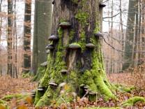 Buchenbestand Kleinengelein im Steigerwald, 2014