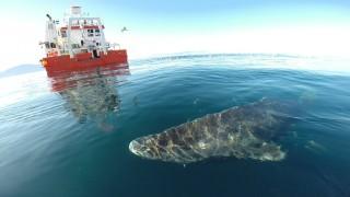 Eishai langlebigstes Säugetier